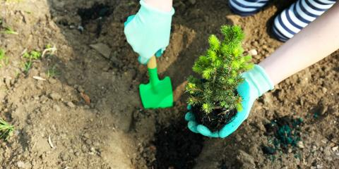 A Complete Guide to Planting New Trees, Kalispell, Montana