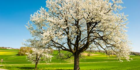5 Ornamental Trees to Include in Your Landscaping, Fenton, Missouri