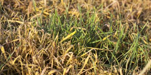 3 Issues That Cause Your Grass to Dry Out, Berrett, Maryland