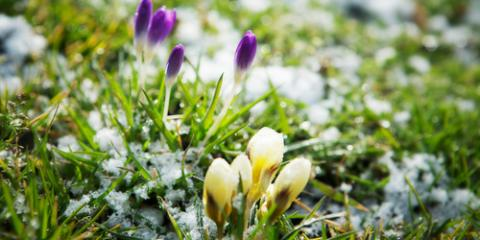 Lawn Care Tips to Prep Your Yard for Winter, Long Valley, New Jersey