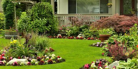 David's Yard Service, Landscapers & Gardeners, Services, Honolulu, Hawaii