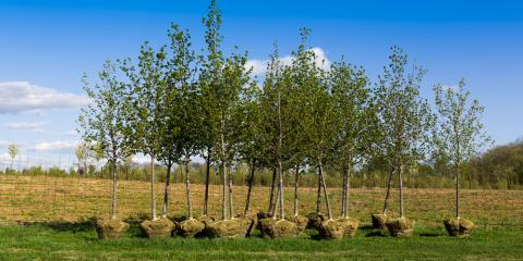 When Is the Best Time to Plant Trees? Landscaping Experts Explain, Grant, Nebraska