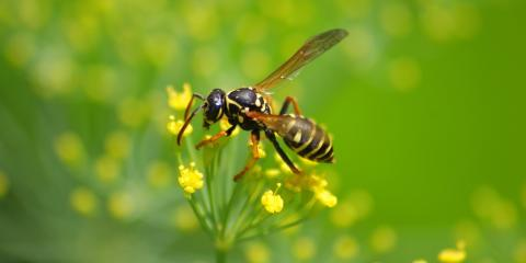 5 Tips for Keeping Your Landscaping Pest-Free, Lincoln, Nebraska