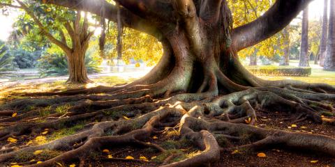 Could Tree Roots Be Damaging Your Home? NC's Landscaping Pros Explain, York, South Carolina