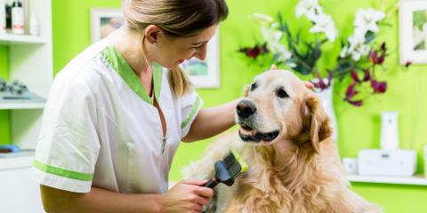 Is Dog Grooming the Career for You?, Philadelphia, PA, Delaware
