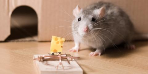 3 Tips for Getting Mice Out of Your Walls, Las Vegas, Nevada