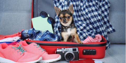 Travel Worry-Free! Top 3 Ways to Find a Dog Sitter This Summer, Sunrise, Florida
