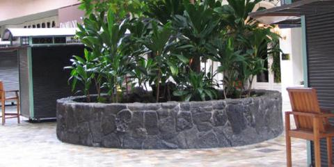 Why Buy a Lava Veneer Planter?, Honolulu, Hawaii