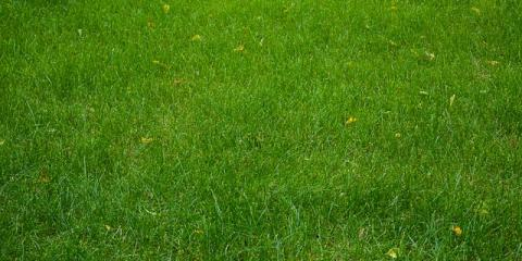 5 Simple Lawn Care Tips for Maintaining a Healthy Lawn, Cromwell, Connecticut