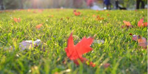 3 Tips to Get an Early Start on Fall Lawn Maintenance, Greece, New York