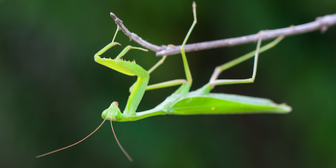 Lawn & Garden Supplies Experts Provide 5 Tips for Organically Controlling Insects, Clifton, Texas
