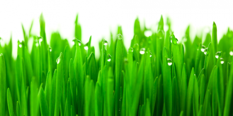 Lawn Care Experts Explain Why You Should Know Your Region's Grass Types, West Chester, Ohio