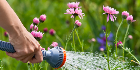 Lawn Care Tips to Help Your Yard Survive a Drought, West Chester, Ohio