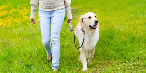 3 Lawn Care Tips Dog Owners Should Follow, Ewa, Hawaii