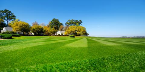 Summer Lawn Care Tips, Lexington-Fayette, Kentucky