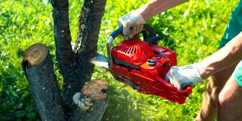 How to Know When You Need Tree Removal Services, Lancaster, South Carolina