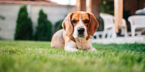 4 Dangers of Dog Waste in Your Yard, Saratoga, Wisconsin