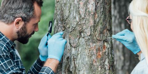 3 Tips for Identifying Dying Trees, Altadena, California