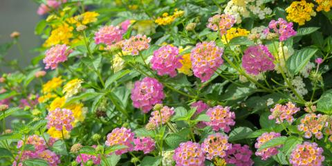 3 Heat-Resistant Plants for Your Landscape Design, Maryland Heights, Missouri