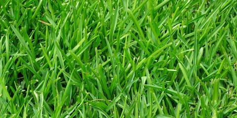 Lawn Care: Why You Should Fertilize Regularly, Anchorage, Alaska