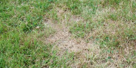 Your Kahului Lawn Service Explains 5 Reasons for Brown Grass Spots, Kahului, Hawaii