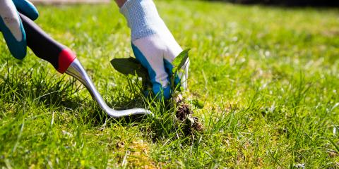 How Can You Control Weeds in Your Yard?, Papillion, Nebraska
