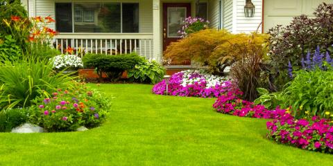 Lawn Care Experts Offer Tips for Controlling Grub Worms, West Chester, Ohio