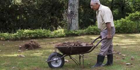 How to Revive a Dry Lawn, Dothan, Alabama