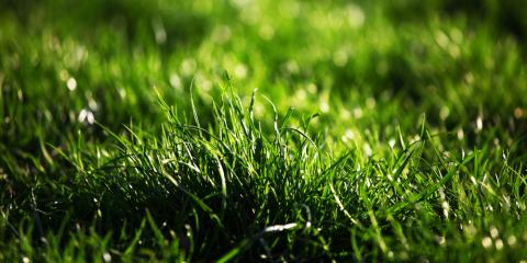 When Should You Schedule Lawn Fertilization & Treatments?, Enterprise, Alabama