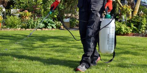 When Should You Apply Insecticide to Your Lawn?, Saltillo, Nebraska