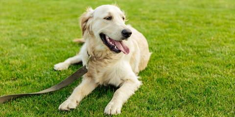 Have a Dog? Do's & Don'ts for Protecting Your Sod Lawn, Hill, Arkansas