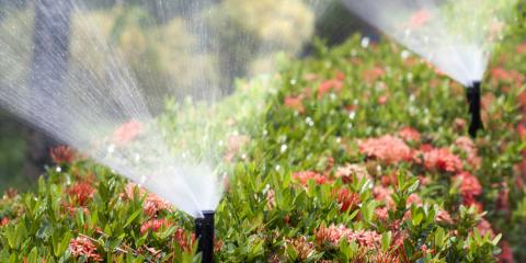 5 Dangers of Overwatering Your Lawn , Rochester, New York