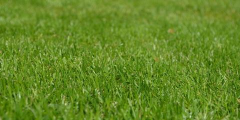 New Customers Get $7 Off First Lawn Treatment!, Enterprise, Alabama