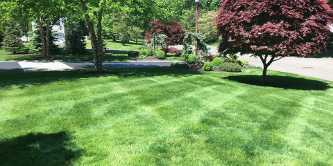 Why Hire a Professional for Lawn Mowing?, Trumbull, Connecticut