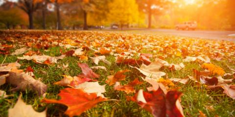 Prep for Winter With Lawn Care Tips From the Pros, St. Charles, Missouri