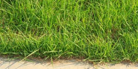 3 Commons Arkansas Weeds & Lawn Care Tips to Fight Them, Illinois, Arkansas