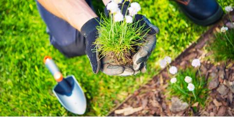 Hilo Garden Store Shares 5 Lawn Care Tips For The Summertime, Hilo, Hawaii