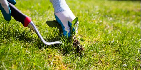 The Best Lawn Care Practices for Summer Weed Control, Enterprise, Alabama
