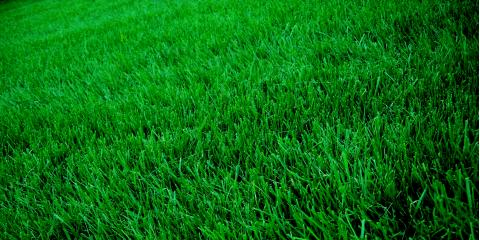 Grago Lawn Care: The Expert in Weed Control in Sewickley, PA, Sewickley, Pennsylvania