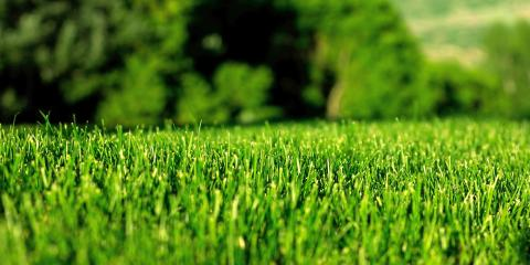 3 Year-Round Lawn Service Tips From Grago Lawn Care in Sewickley, Sewickley, Pennsylvania