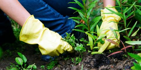 Lawn Care: 3 Ways Weed Control Will Transform Your Yard, Columbus, Ohio