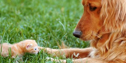 Lawn Fertilization Service Offers 3 Tips to Protect Pets From Fertilizers & Pesticides, Columbus, Ohio