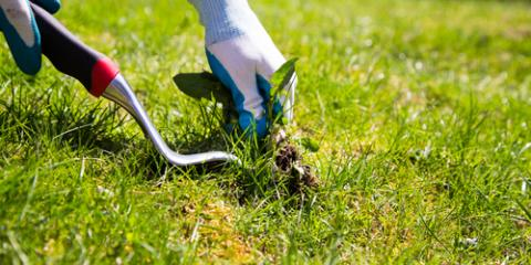 Why Managing Poa Annua Grass Is a Lawn Maintenance Priority , Denver, North Carolina