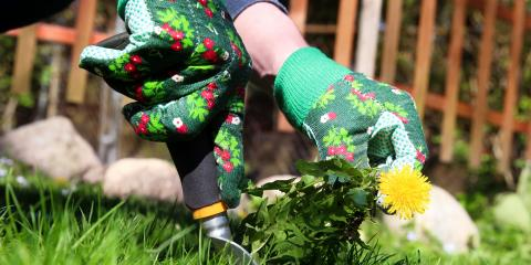 What R & T Lawn Services, Inc Has Planned for Your Lawn in March, Catawba Springs, North Carolina