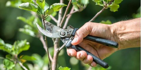 3 Lawn Maintenance Tips for Pruning Trees & Shrubs, Batavia, New York