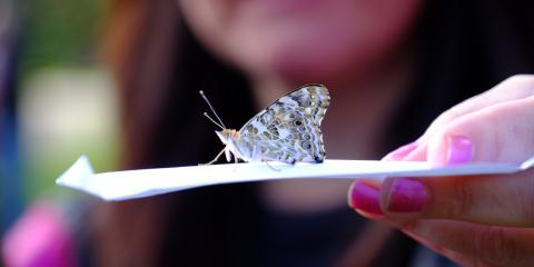 Honor First Responders With a Memorial Butterfly Release, Greece, New York