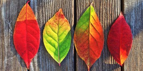 Expert Advice to Enhance Your Fall Floral Arrangements , Brooklyn, New York