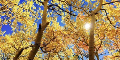 3 Reasons to Consider Regular Tree Thinning, Summerdale, Alabama