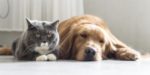 3 Reasons to Call the Professionals for Flea Prevention & Control, Lebanon, Kentucky