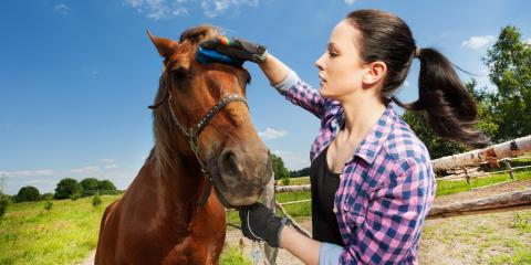 3 Benefits to Grooming Your Horse at Home, Lebanon, Ohio